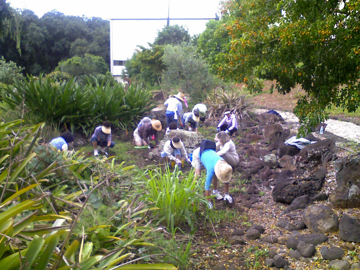 friends of halawa xeriscape garden volunteers january 2009