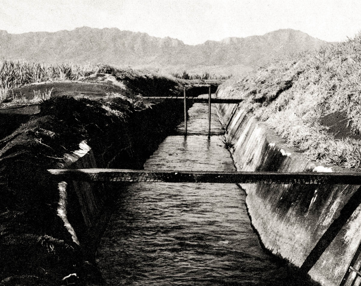 historical photo of sugar irrigation